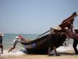 Bộ NN&PTNT: Ngư dân miền Trung đã được phép khai thác hải sản