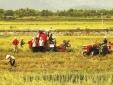 Phó Thủ tướng: Tái cơ cấu nông nghiệp phải gắn với thị trường