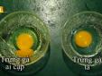 Lộn xộn trứng gà Ai Cập gắn mác trứng gà ta