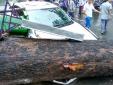 TP. Hồ Chí Minh: Cây cổ thụ đổ ngang đường, 1 người tử vong