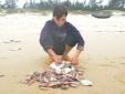 Lùi thời hạn bồi thường thiệt hại sự cố môi trường biển tại 4 tỉnh miền Trung