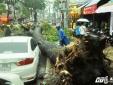 TP. Hồ Chí Minh: Liên tiếp 3 cây cổ thụ đổ đè chết 2 người, 1 người trọng thương