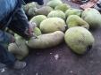 Cảnh báo nổi bật nhất ngày 27/9: Lại 'ngã ngửa' với  thuốc 'kích' chín trái cây