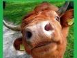 """Tin nhắn """"con học ngu như bò"""" từ THCS Ba Đình: Lỗ hổng từ hệ thống?"""