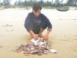 Ứng trước 3.000 tỷ ngân sách bồi thường ngư dân 4 tỉnh miền Trung