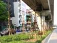 Nhiều cây xanh 'mọc' lên dưới gầm đường sắt Cát Linh - Hà Đông