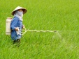 Tin tức cảnh báo nổi bật ngày 4/12: Cảnh giác với hiểm họa từ thuốc diệt cỏ