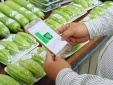 Hôm nay, người dân TP.HCM chính thức truy xuất được nguồn gốc rau quả trên điện thoại