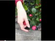 Video: Cay đắng mua hoa giả gắn toàn kim