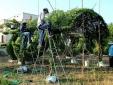 Cận cảnh làng chuyên tao hình trái cây, cây cảnh tết độc, lạ