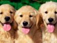Nhật Bản phát minh thiết bị giúp hiểu cảm xúc vật nuôi