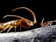 Bí ẩn hang động 5,5 triệu năm bị bịt kín và những loài vật kỳ lạ