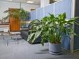 Trường hợp nào cần đặt cây cảnh để hóa giải bớt sát khí?