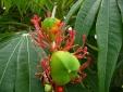 Bộ Y tế điểm mặt hàng loạt cây cảnh chứa độc cần loại bỏ trồng