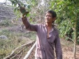 Nông dân thu lãi 'khủng' từ việc trồng cây hồng quân