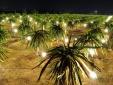 Ồ ạt trồng cây thanh long ruột đỏ: Nguy cơ phá vỡ quy hoạch