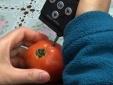 Kit test vẫn 'miễn nhiễm' với nhiều chất độc trong thực phẩm bẩn