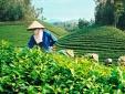 Hàng Việt Nam chất lượng nhưng vẫn bị 'bỏ rơi' vì thiếu thương hiệu?