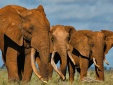 Loài vật bé nhỏ khiến sinh vật to lớn nhất trên mặt đất 'kinh hãi'