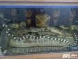 Đại gia Hà Nội mua rắn hổ mang chúa nặng 45kg giá gần 300 triệu