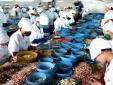 Làm sao để hạn chế tình trạng nông sản, thực phẩm Việt bị trả về?