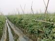 Vĩnh Phúc: Nỗ lực ứng dụng khoa học và công nghệ trong lĩnh vực nông nghiệp