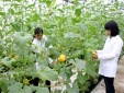 Thí sinh nhập học trường Học viện Nông nghiệp cần biết: Tiền học phí, giá nội trú