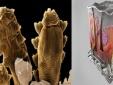 Bí ẩn loài vật '8 chân' sống trên mặt người mà không thể 'tiêu diệt'