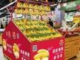 Bầu Đức xuất khẩu hơn 300 tấn chuối sang Trung Quốc mỗi ngày