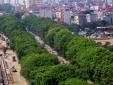 Ngày 18/10, Hà Nội bắt đầu chặt hạ, di dời gần 1.300 cây xanh ở đường Phạm Văn Đồng