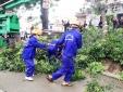 Hàng cây xanh mướt trên đường Phạm Văn Đồng đang được đào tận gốc, chém bớt cành để chuyển đi