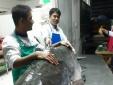 An Giang: Cá tra khổng lồ 160 kg về nhà hàng, đại gia trả 1 triệu đồng/kg