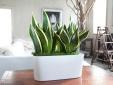 Những vị trí trồng cây phong thủy hút tài lộc nhất trong ngôi nhà