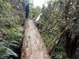 Khởi tố hai cán bộ bảo vệ rừng ở Nghệ An