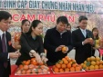 Cam Phù Yên được Cục Sở hữu trí tuệ công nhận nhãn hiệu cam 'xịn'