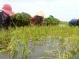 Xử phạt hơn 1,2 tỷ đồng vi phạm trong lĩnh vực nông nghiệp