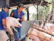 Giá cả thị trường ngày 20/1: Giá lợn hơi tại miền Bắc tiếp tục tăng nhẹ một vài tỉnh