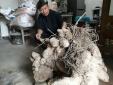 Nghệ An: Xôn xao củ khoai lộ 'khủng' nặng gần 70 kg nhìn như gốc cây cổ thụ