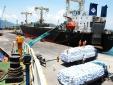 Bí thư Bình Định muốn 'đòi' lại cảng Quy Nhơn cho Nhà nước
