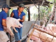 Giá cả thị trường ngày 22/1: Giá lợn hơi tại miền Bắc lên mức 37.000 đồng/kg
