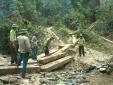UBND Quảng Bình ra công văn khẩn về vụ 'xẻ thịt' rừng phòng hộ lớn nhất tỉnh