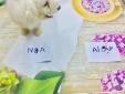 Kết quả World Cup 2018 Nga vs Ai Cập: Chó 'tiên tri Đao Đao' dự đoán bất ngờ