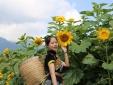 Check-in đồi 'hoa mặt trời' đẹp hơn trong phim ở chân núi Fansipan