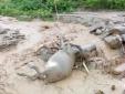 Mưa lũ ở Yên Bái: 26 người chết, mất tích và bị thương, nhiều nơi bị chia cắt