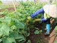 Công nghiệp 4.0: 'Bệ phóng' nông nghiệp thông minh, phát triển bền vững