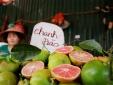 Giá chanh giảm mạnh tại nhiều huyện ngoại thành Hà Nội