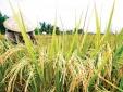 Giả mạo Quyết định của Quatest 3 để lừa đảo nông dân