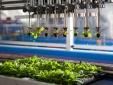 Hợp tác chuyển giao công nghệ sản xuất phân bón hữu cơ chất lượng cao