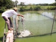 Nâng cao năng suất nhờ nuôi cá theo mô hình VietGap