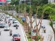 Trong 5 năm, TP. Hà Nội dự kiến trồng hơn 1,5 triệu cây xanh